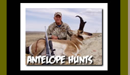 Guided Antelope Hunting Trips in Wyoming